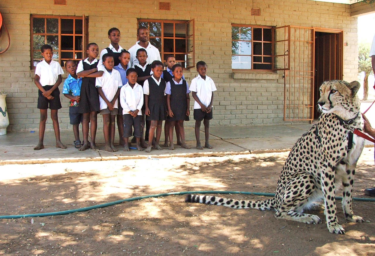 SA Veterinary Foundation supports the Cheetah Outreach Trust
