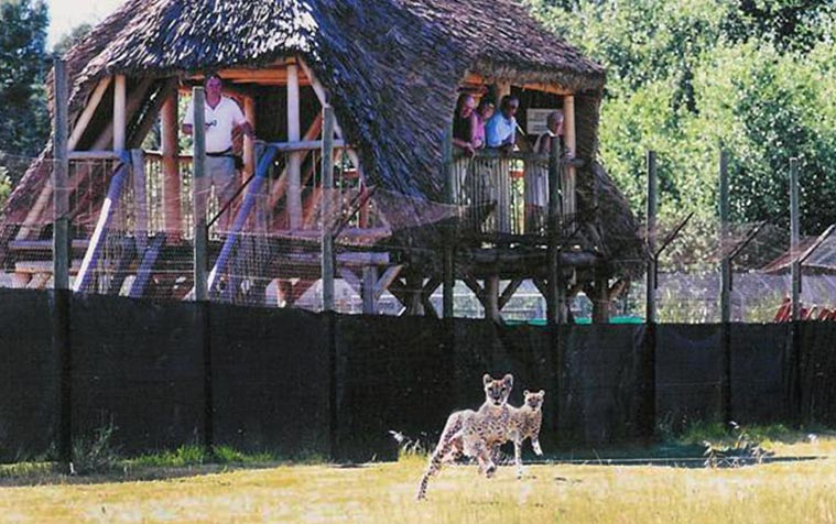 Foundation supports the Cheetah Outreach Trust